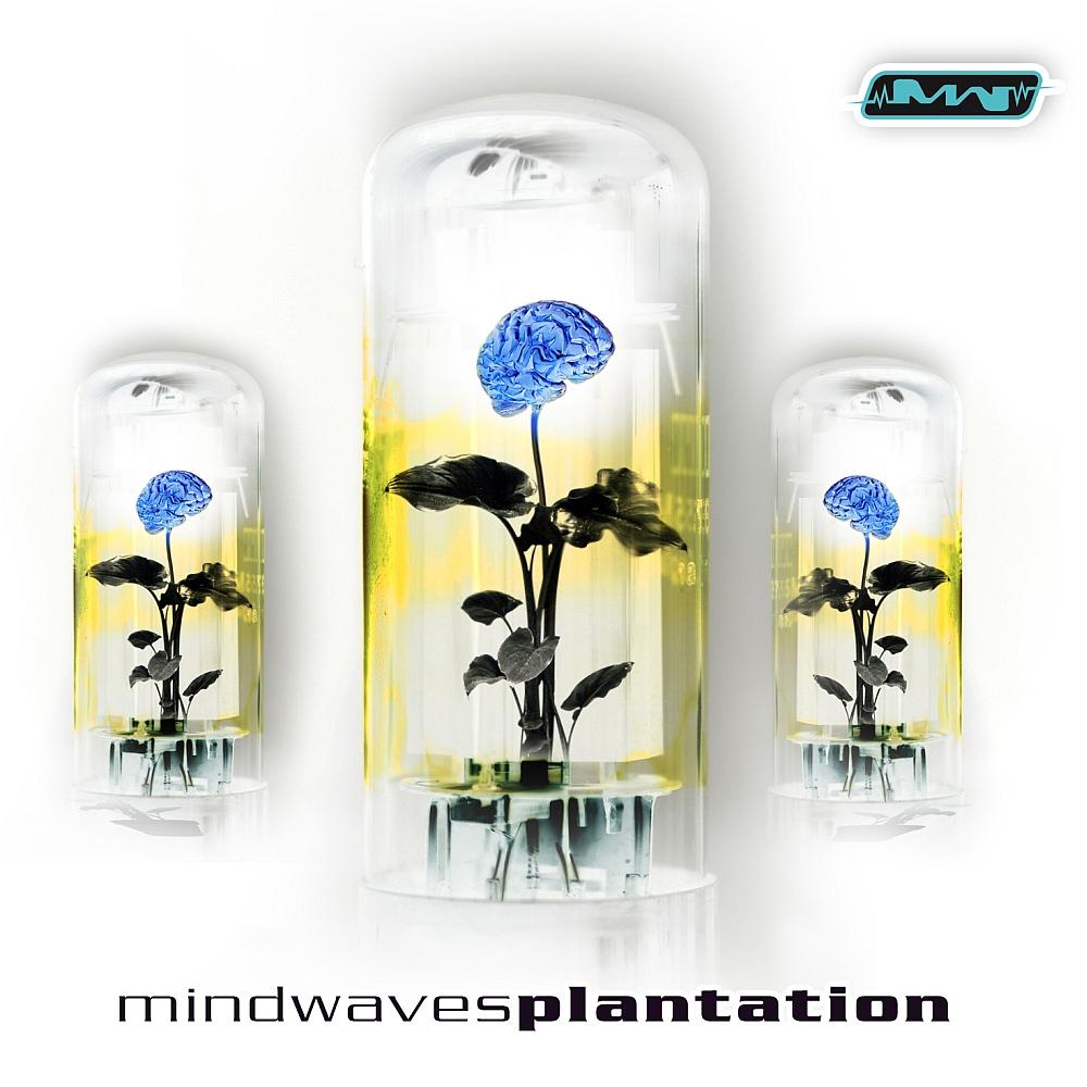 Various Artists - Plantation